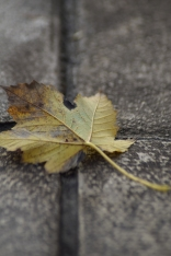 leaf-on-the-pavement